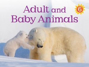 Level 6 - 8x6_Adult and Baby Animals